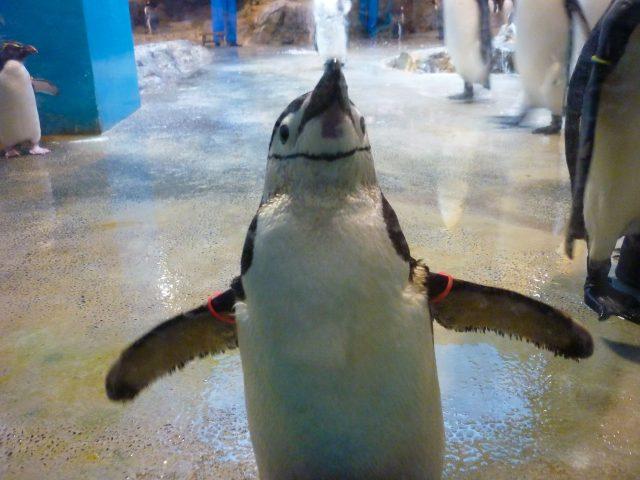 nagasaki-penguin01