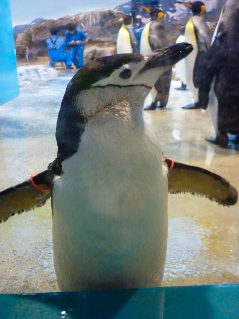 nagasaki-penguin03