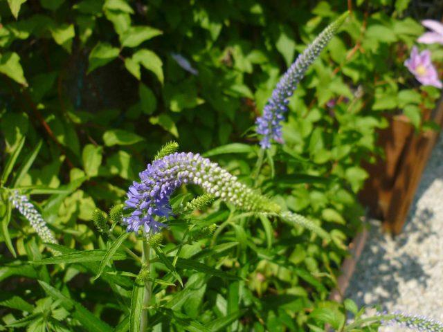 plants-toranoo01