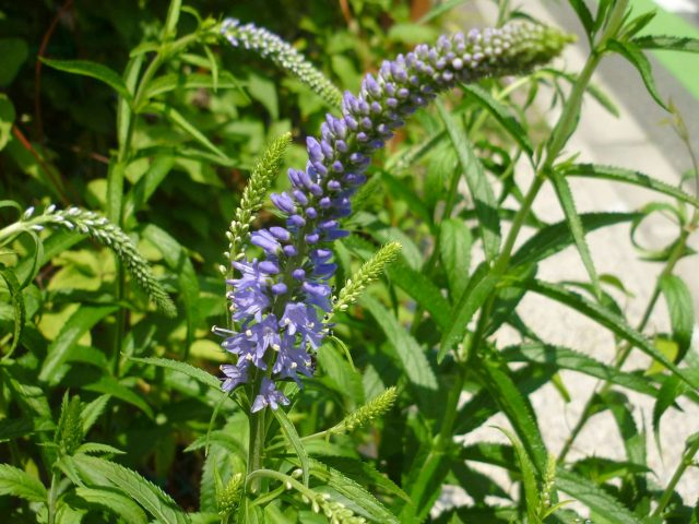 plants-toranoo02
